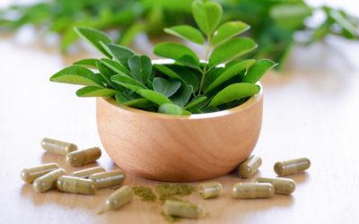 Le moringa : la plante qui vous veut du bien